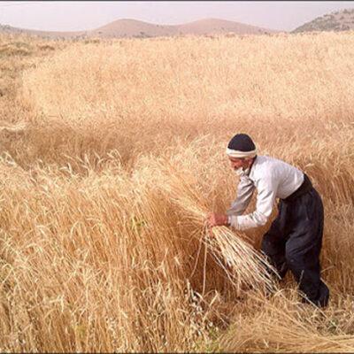 کشاورزی سنتی
